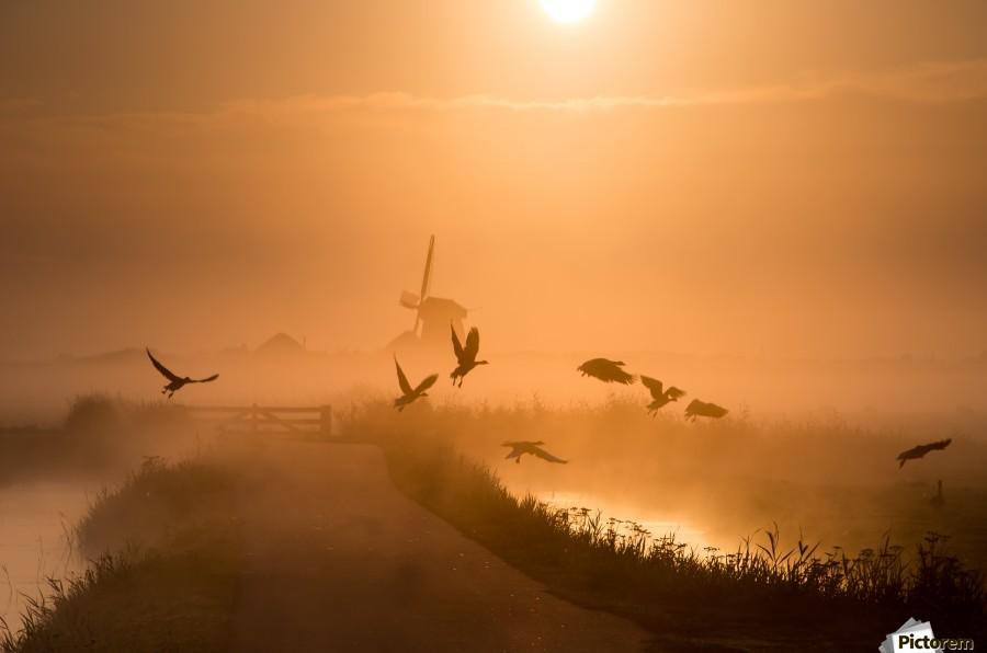 Sunrise Flight  Print