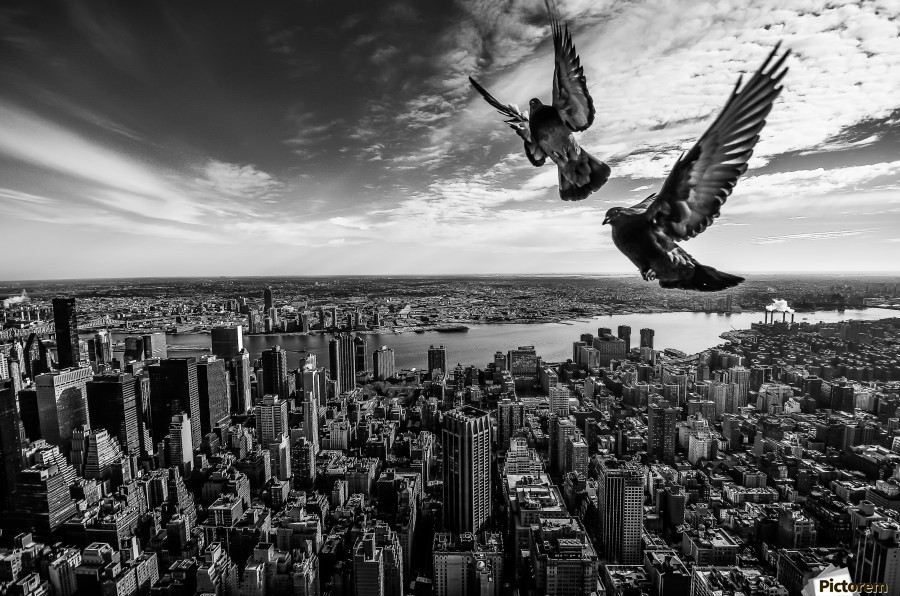 Pigeons on the Empire State Building  Print
