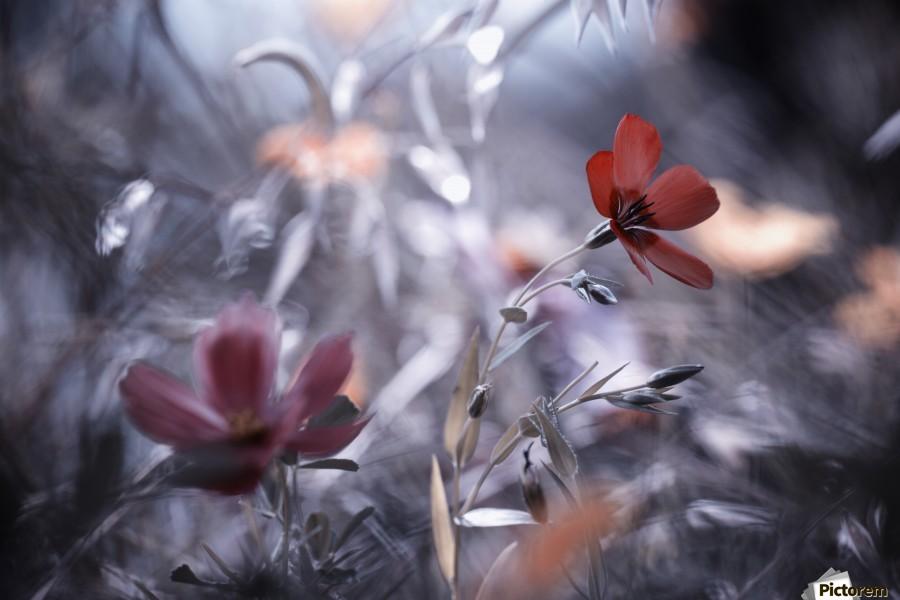 Une Fleur, une Histoire by Fabien BRAVIN   Imprimer