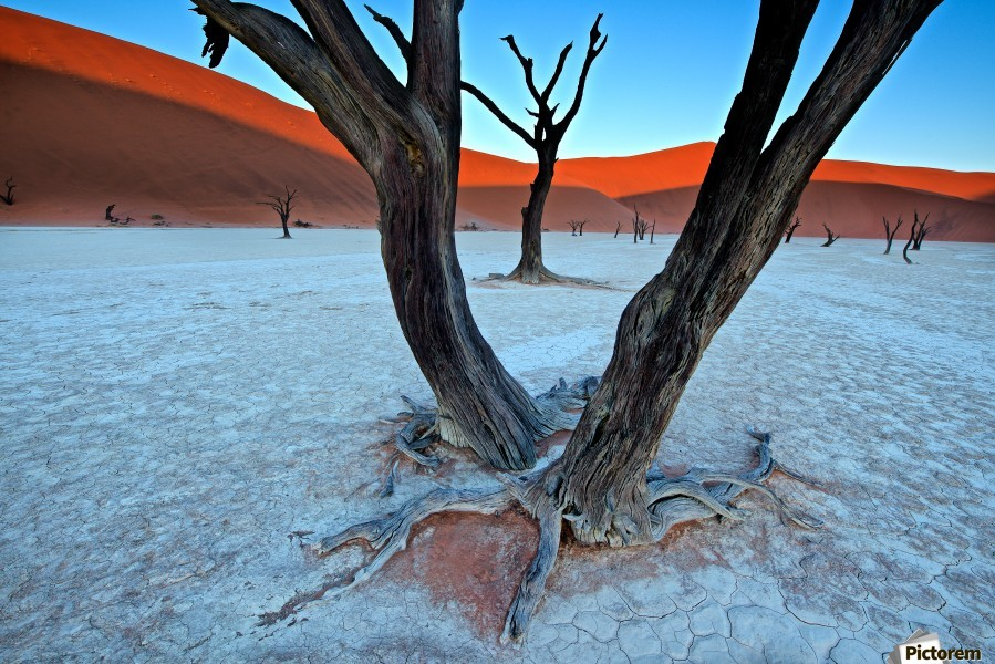 Ancient trees in the Vlei  Print