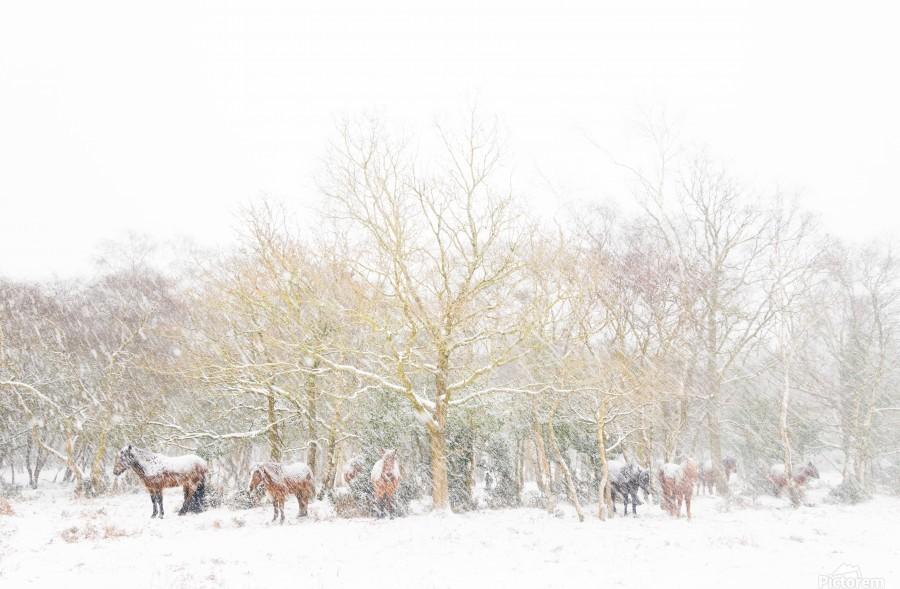 SNOW HORSES 3.  Print