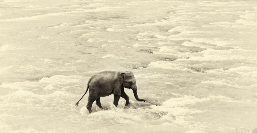 RIVER ELEPHANTS 5.  Print