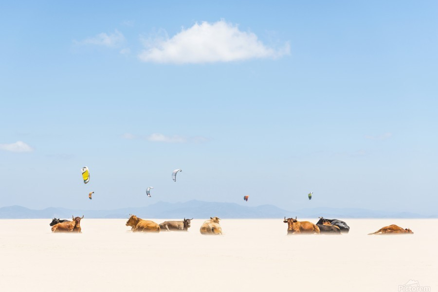 COWS AND KITES  Print