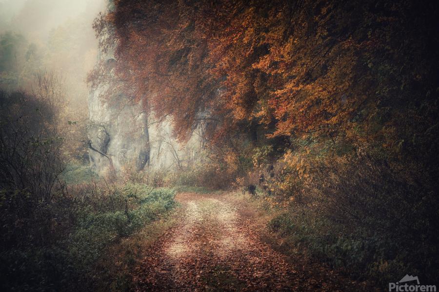 Foggy autumn forest  Print