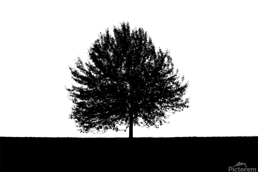 Silhouette of a lonely tree  Print