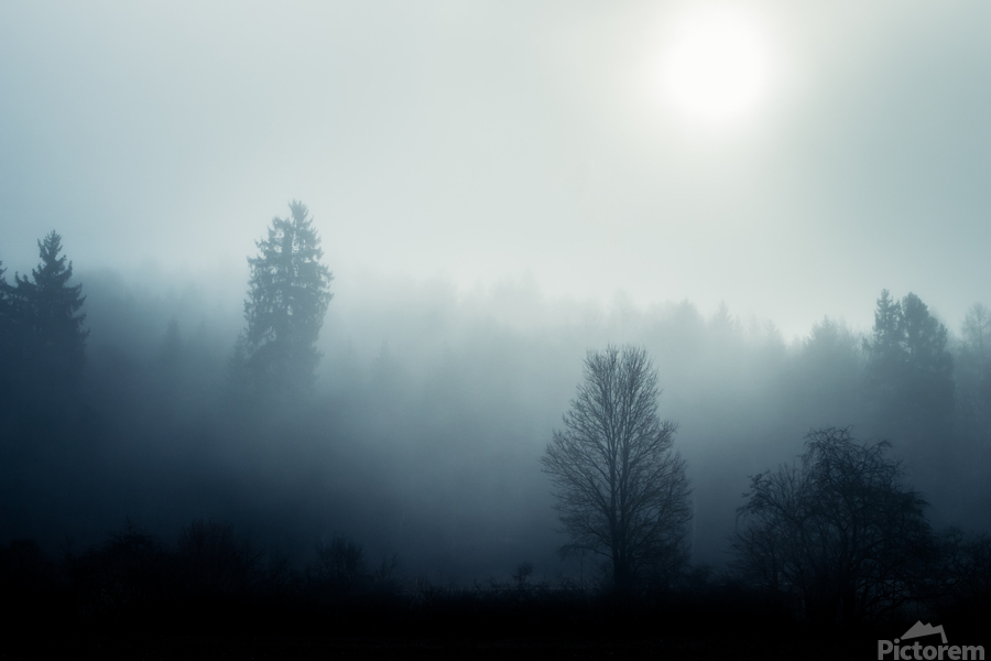 Sunrise in the misty forest  Print