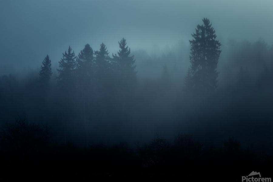 Foggy forest  Print