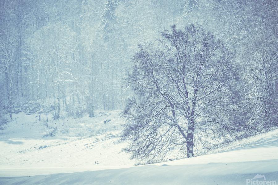 Snowy landscape  Print