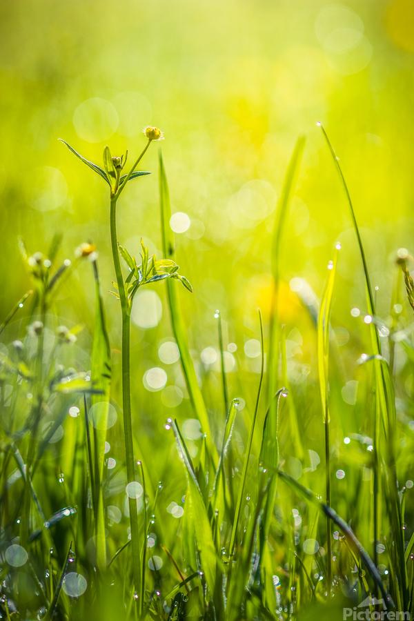 Summer meadow  Print