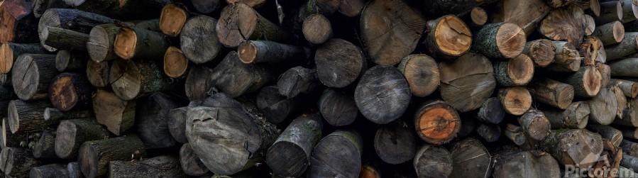 Log Pile  Print
