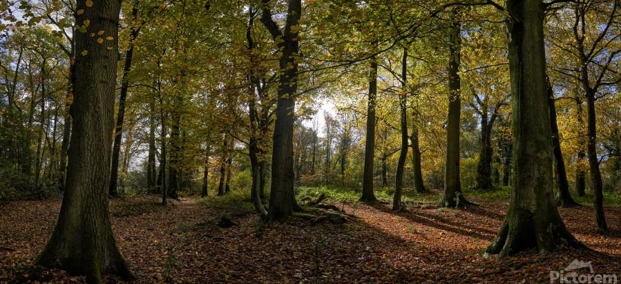 Autumn Forest  Print