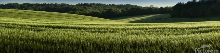 Wheat Fields  Print