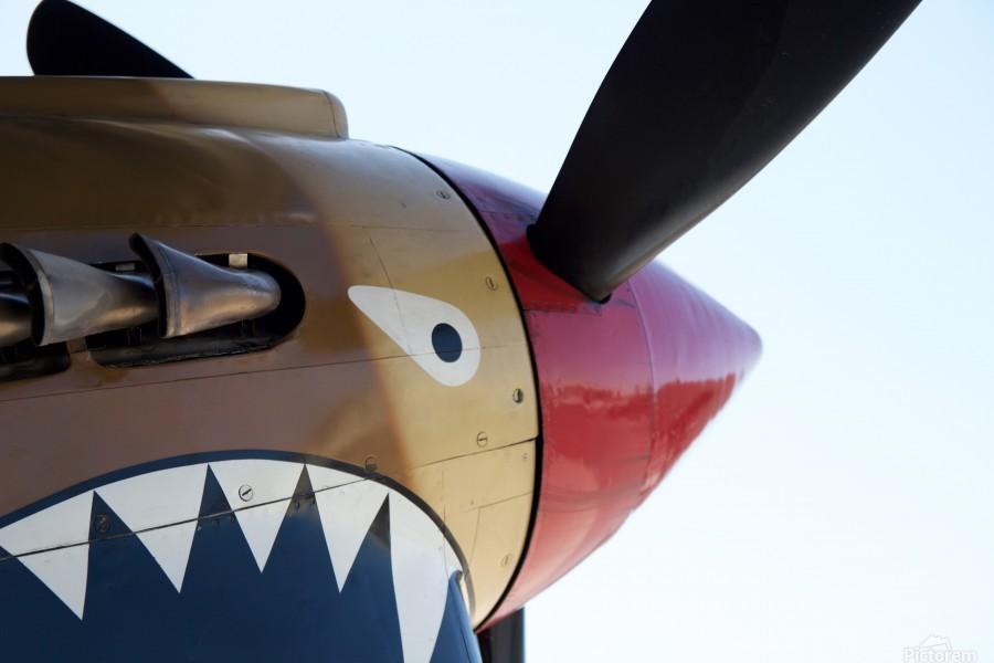 P-40 Warhawk Nose  Print