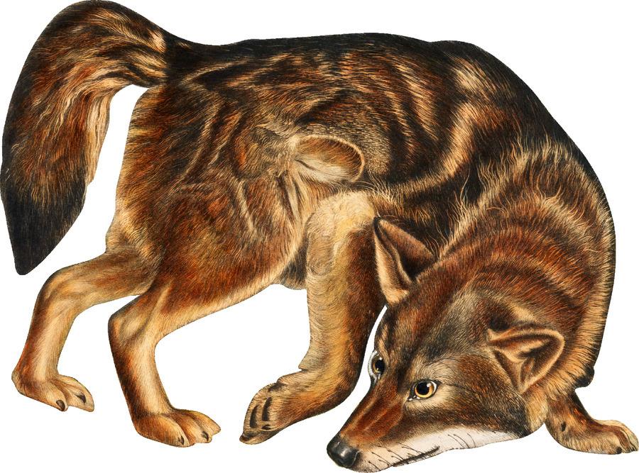 Fox Print | British Wildlife Art | A3 A4 A5 | Fox Lover Gift | Fox Illustration | Fox Painting | Fox Nursery Wall Art | British Animal Print  Print