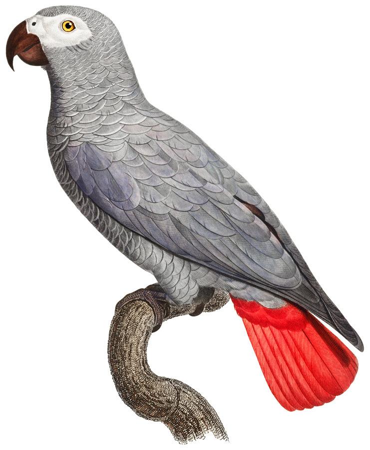 Parrot Print Art Poster with Parrot Parrot Wall Art for Bird Lovers  Print