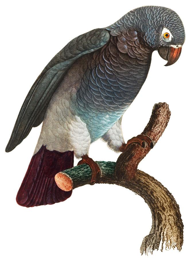 Macaw - Birds - Paradise - Tropical- Art Print - Wall Art - Parrot  Print