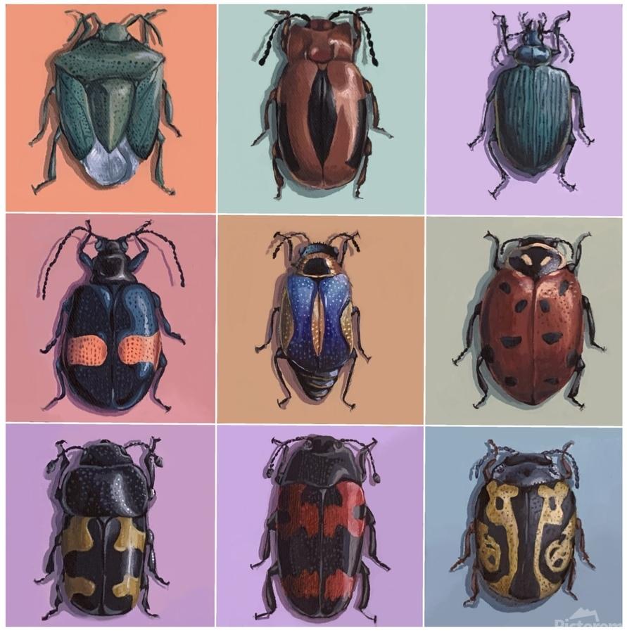 Assorted Beetles  Print