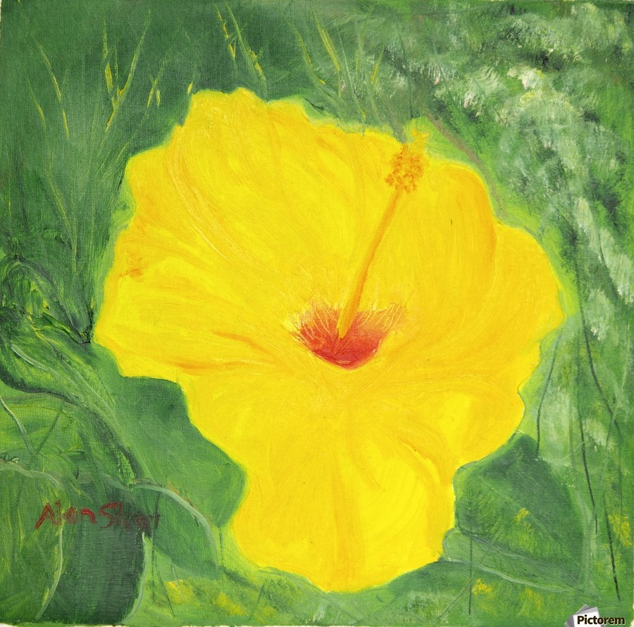 Yellow Hisbiscus Flower.  Print