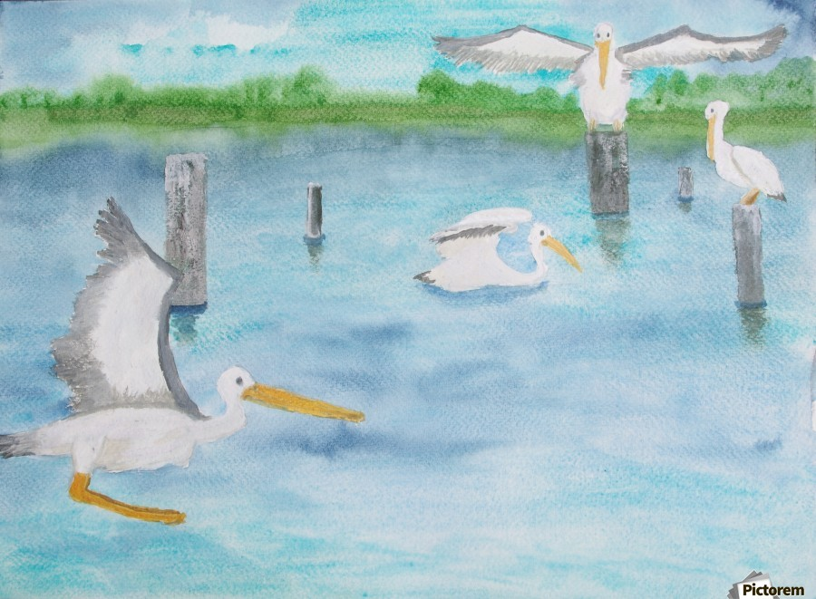 Pelicans in a coastal inlet.  Print