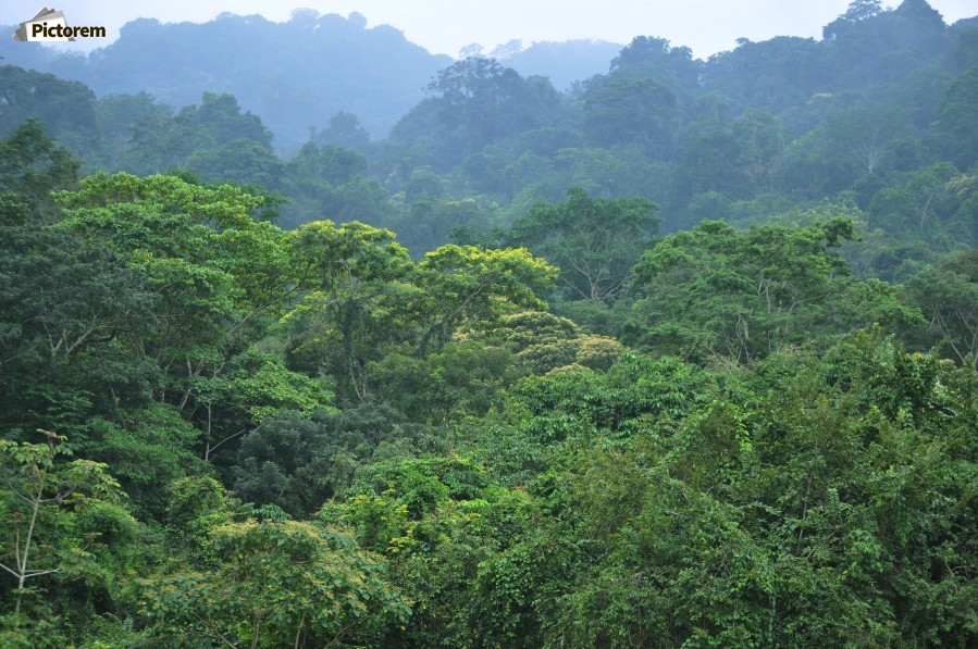 Rainforest  Print