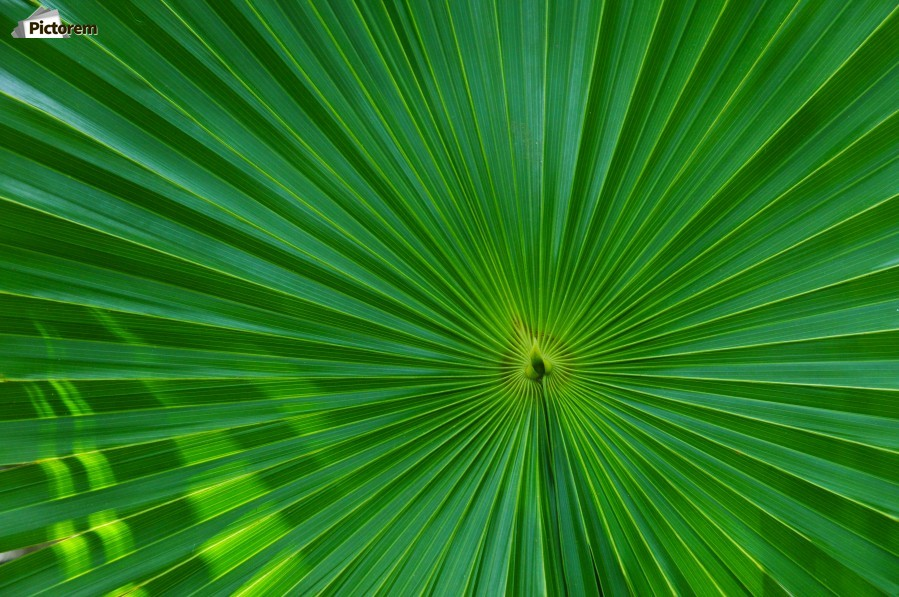 Palm tree detail  Print