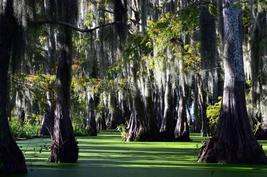 Swampy  Print