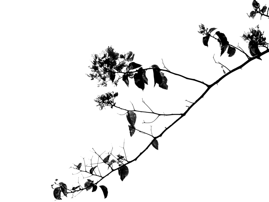 Tree Branch II  Print
