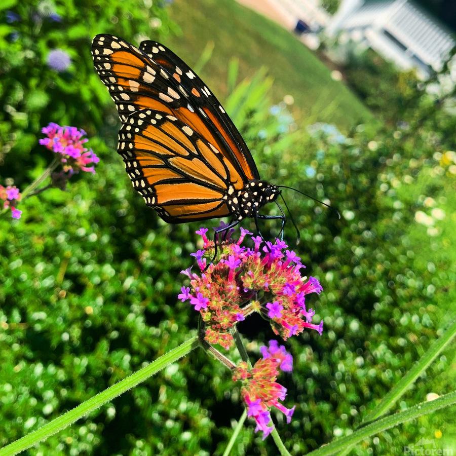 Butterfly Bliss   Print