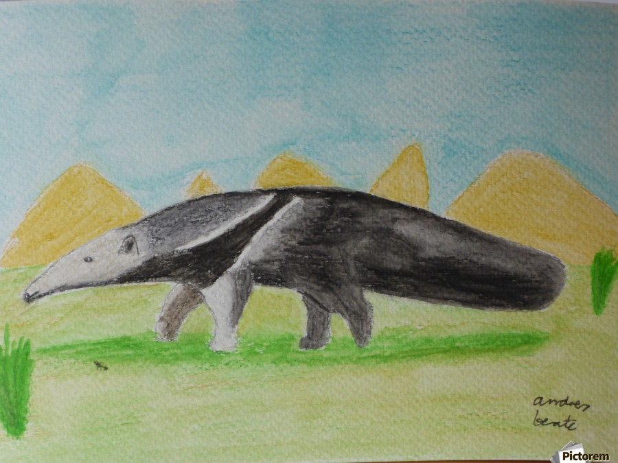 Anteater  Print