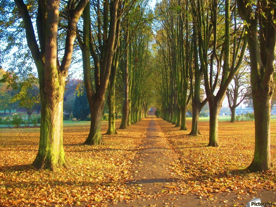 Autumnal Avenue  Print