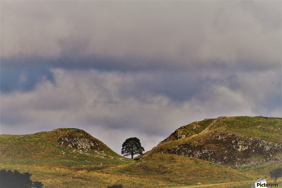 Hadrian's wall tree  Print