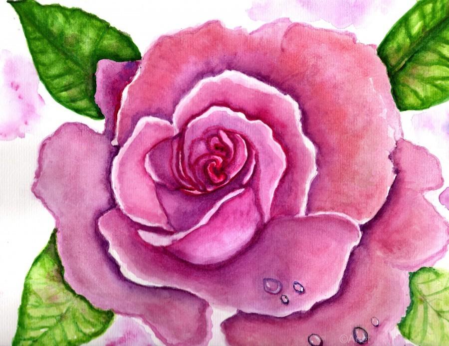 Magnificent Rose  Print