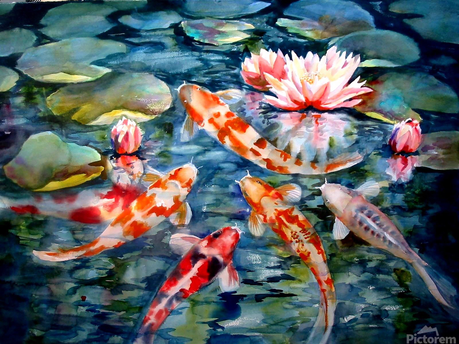 Koi Pond  Print