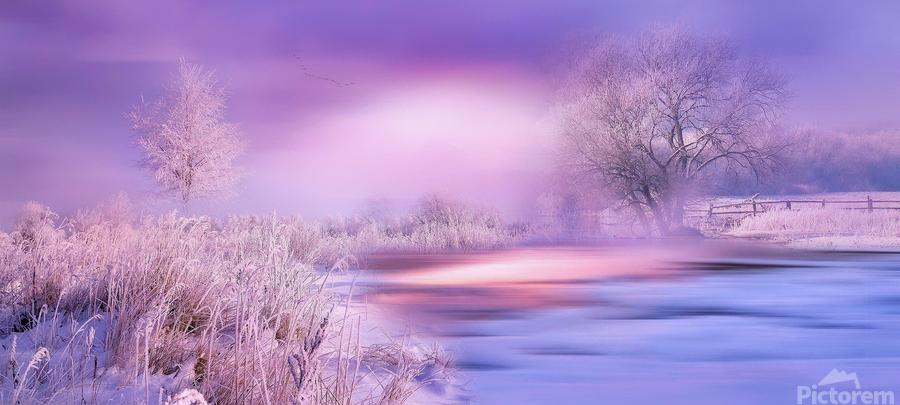 Dreaming In Purple  Print