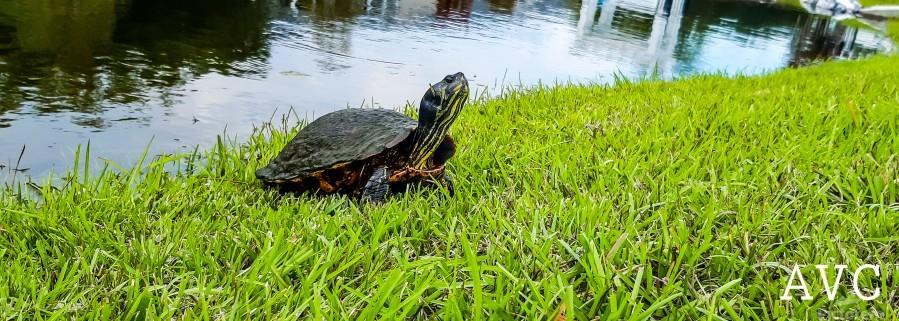 Turtle Portrait  Print