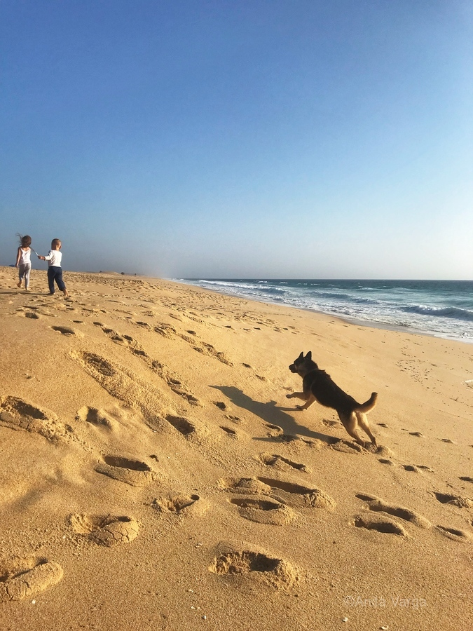 Dog and kids on the beach in Portugal  Print