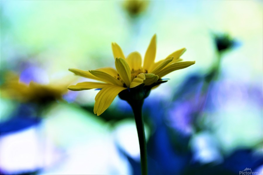 yellow flower  Print