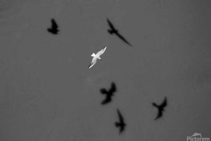 Bird and Shadows  Print
