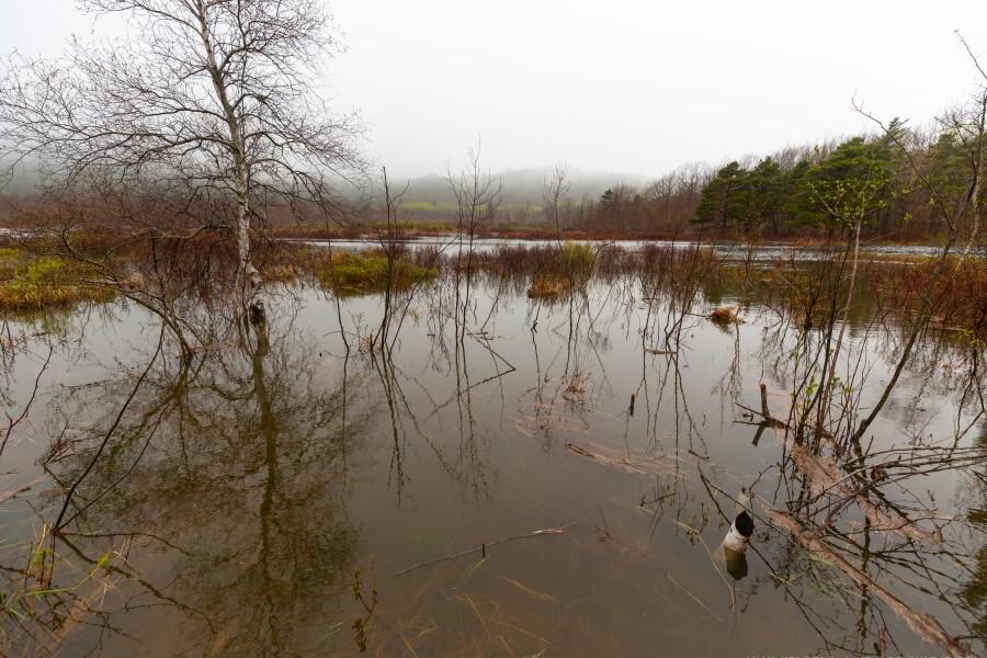 Beaver Pond ap 2357  Print