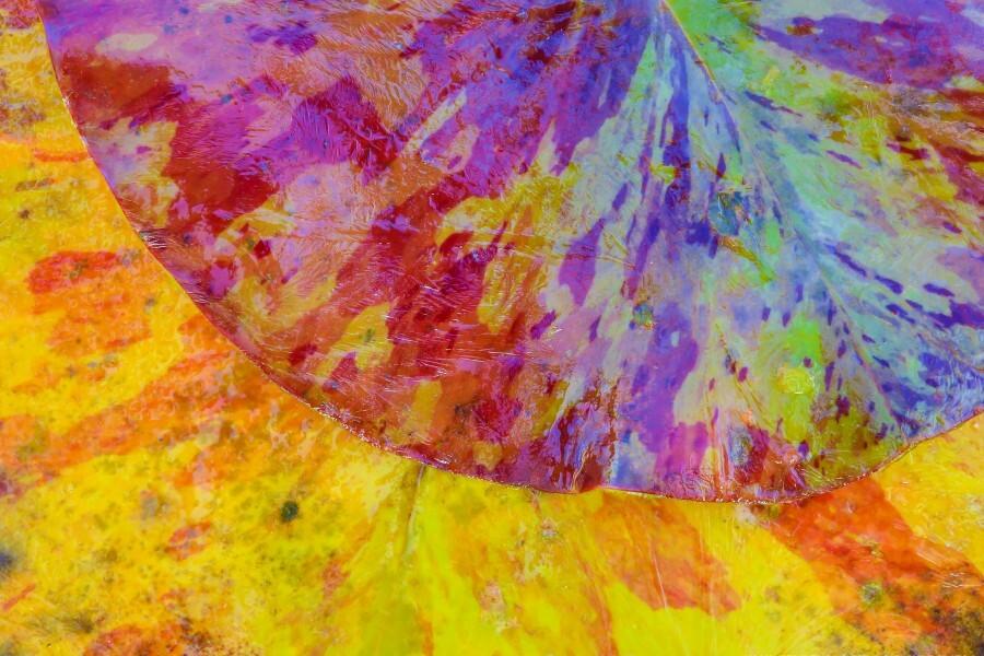 Colors Of Nature ap 2037  Print