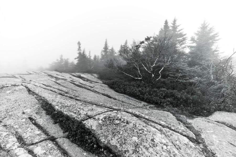 Lichen and Granite ap 2340 B&W  Print