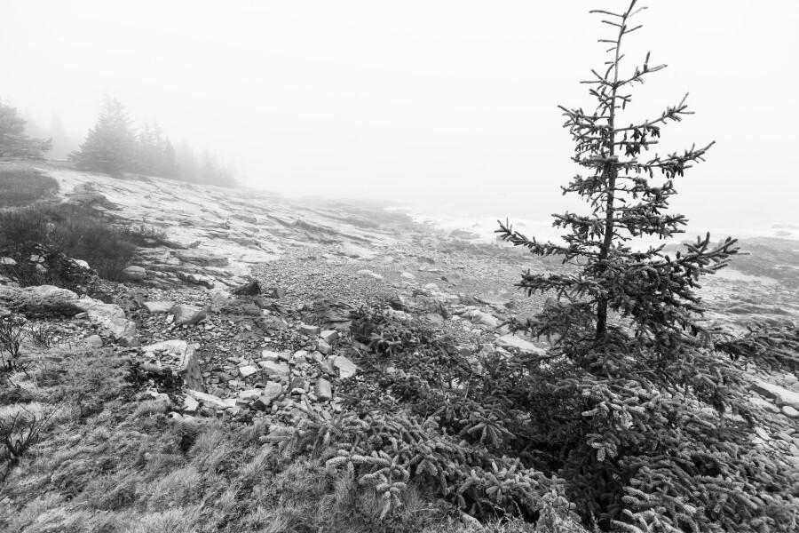 Lone Pine ap 2284 B&W  Print