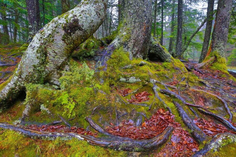 Moss   Lichen ap 2196  Print