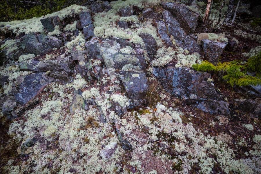 Purple Rocks ap 2289  Print