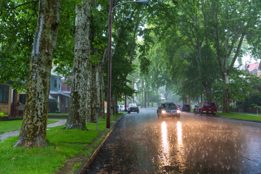 Summer Rain ap 2892  Print