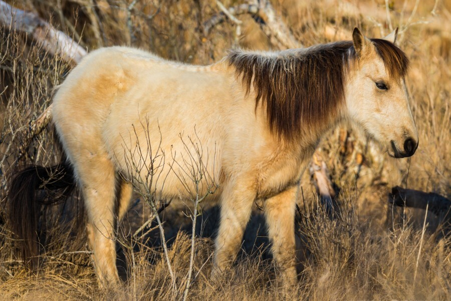 Wild Horse ap 2740  Print