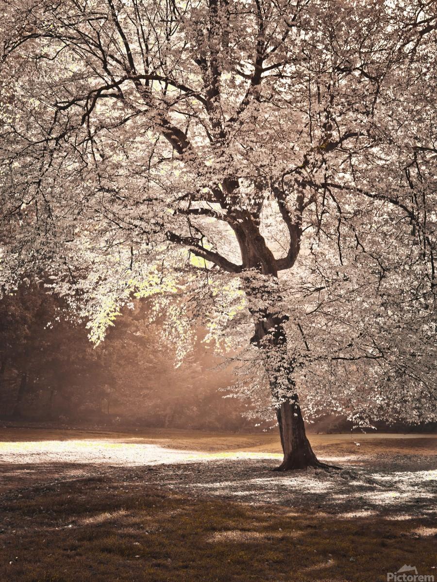 Autumn tree in sunlight  Print