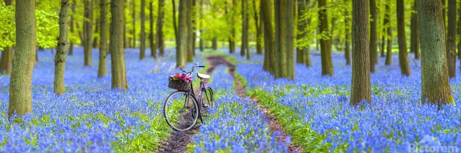 Bicycle in spring forest  Print