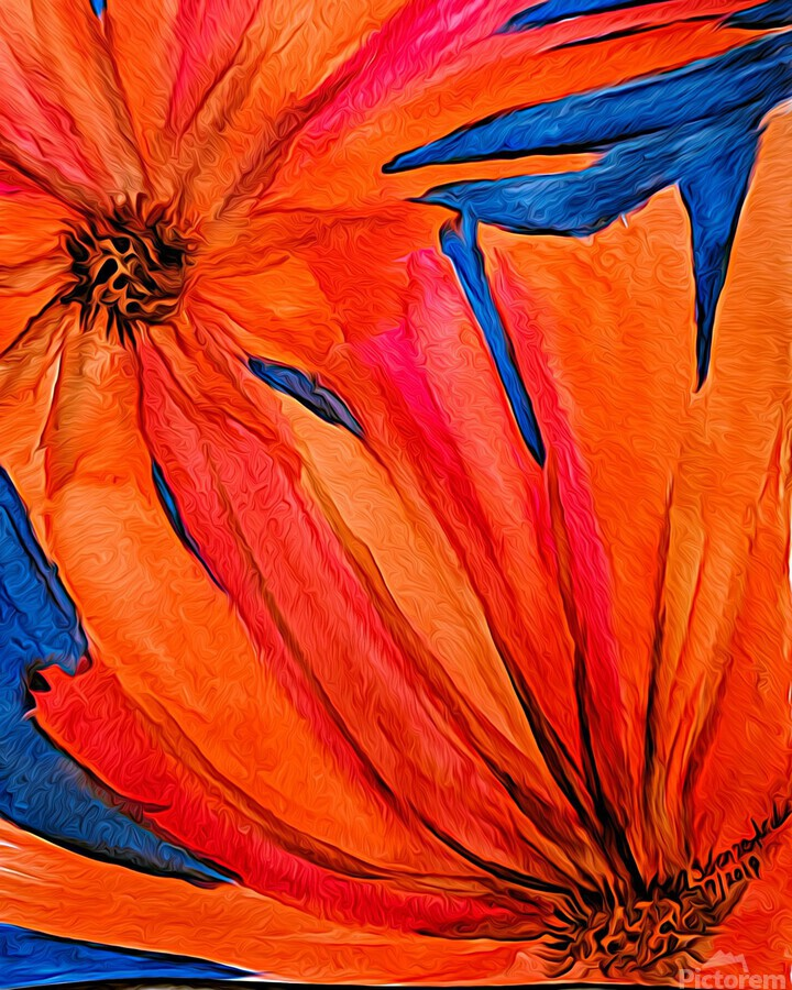 Orange Flowers   Print