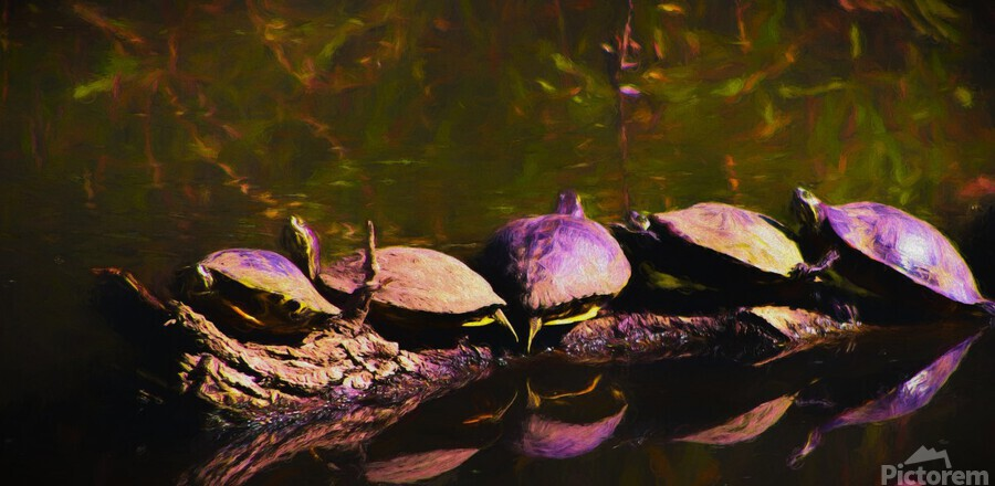 Freshwater Turtles Watercolor  Print